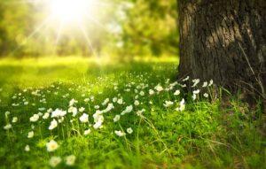napfény tavaszi virágos rét fák